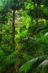 Barron Gorge National Park, Queensland, Australia