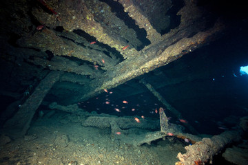The Dunraven wreck and marine life in the Red Sea.