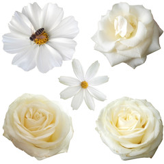Set of  white flower heads isolated on white background