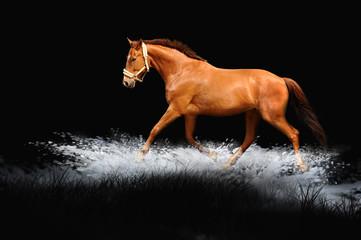 Pferde 128