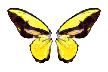 yelow brilliant butterfly