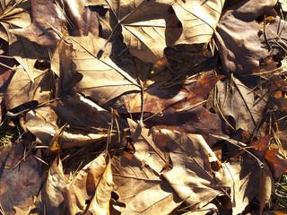 Textur_Blätter