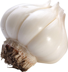 Image of garlic on white background. The file contains a path to