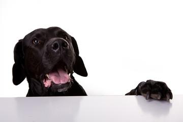 Hund am Tisch