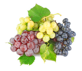 Collection of grape clusters
