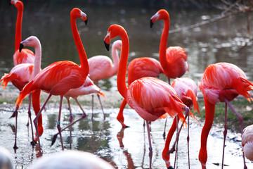 Garden Poster Flamingo flamingo