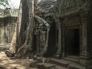 Angkor Thom,Ta Prohm