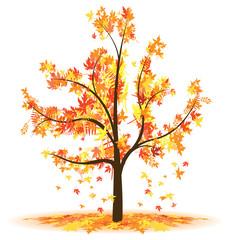 autumn tree leaves falling