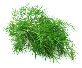 Fennel branch