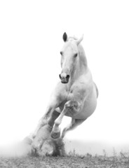 Wall Murals Bestsellers white horse