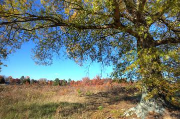 Autumn landscape- HDR