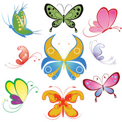 Collection of different multicolored butterfly