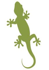 Sagoma geco verde