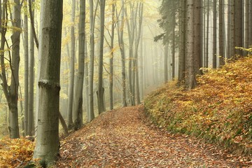 Keuken foto achterwand Bos in mist Mountain trail in the beech forest on a foggy autumn day
