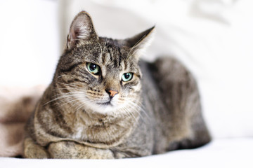 Beautiful Portrait Of A Cat