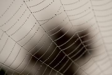 Cobweb Dew