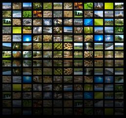 Видео экран с изображением дикой природы