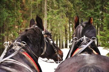 Koń - fototapety na wymiar