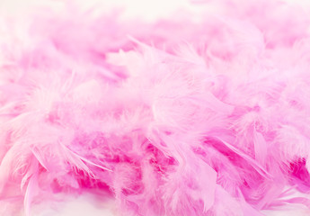 boa,rose,Pink,pink,plume,federn,	feather