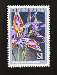 Australian postage stamp of lillies with clipping path