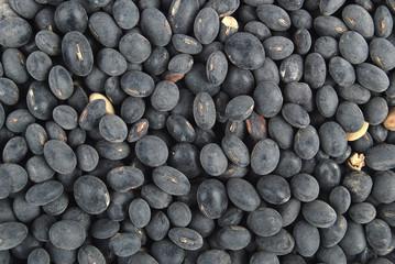 Black soy beans