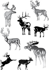 eight grey deers on white