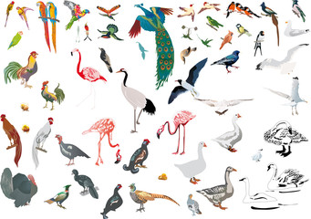 large set of color isolated birds