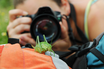 Photographing a grasshopper with a DSLR camera