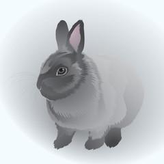 Cute Rabbit / Realistic vector