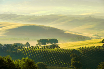 Toskana Huegel  - Tuscany hills 38 Fototapete
