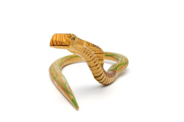 Wooden snake on white background