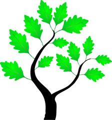 Зеленая веточка дуба