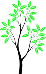 Молодое деревце