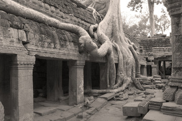 Twisted Tree Roots 4, Ta Prohm Temple, Cambodia
