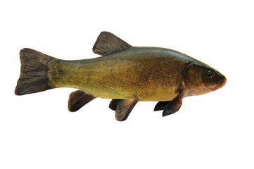 Fische 27