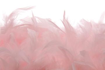 plumes roses sur fond blanc
