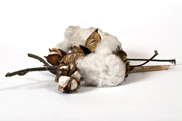 Cotton on the twigs