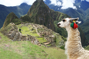 Poster South America Country Llama at Lost City of Machu Picchu - Peru