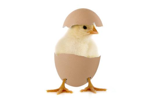 Kleines Küken im Ei