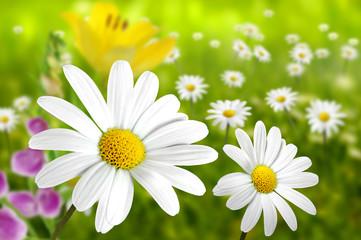 Blumen 198