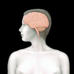 Frau mit Gehirn