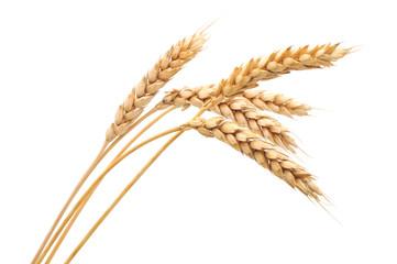 Fototapeta Isolated bunch of wheat obraz