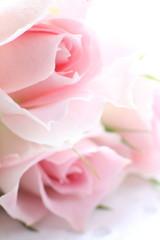 Elegance Pink roses