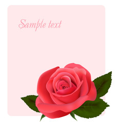 Card with beautiful pink rose, vector illustration
