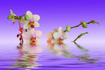 Orchid_relax