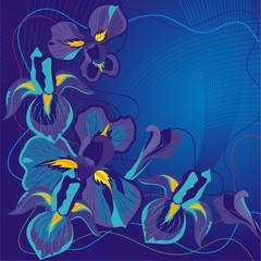 Vector illustration a background from flowers and lines