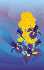 Bouquet from dark blue irises and an orchid branch