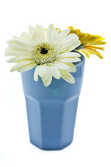 Two gerbera in ceramic vase isolated in white background