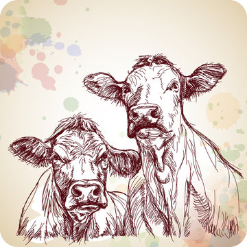two cows hand draw sketch & color paint