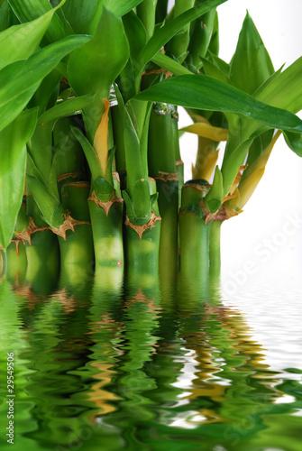 bambous exotiques reflet dans l 39 eau photo libre de droits sur la banque d 39 images. Black Bedroom Furniture Sets. Home Design Ideas